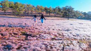 Lễ hội mùa Cỏ hồng Langbiang kỳ ảo của tây nguyên
