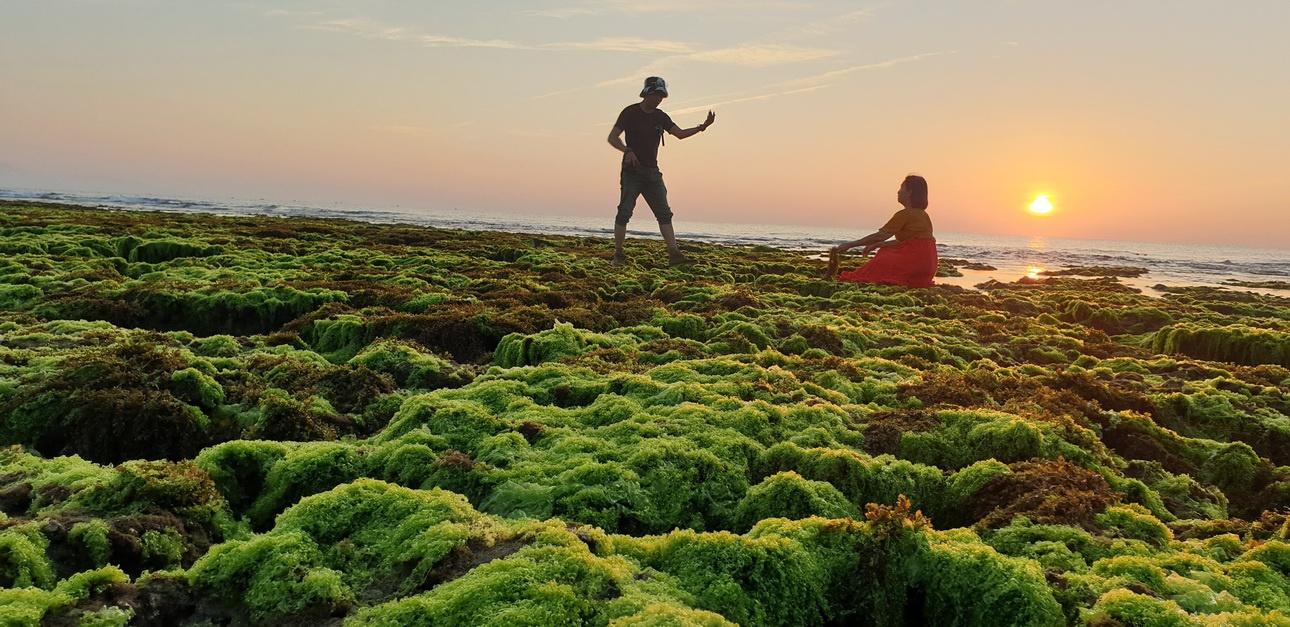 Cánh đồng rong biển Bình Thuận điểm du lịch mới lạ