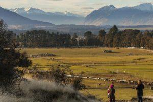 Farm Stay ở New Zealand bạn nên học những gì